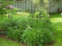 Echinacea (not in bloom), Day lilies and Bee Balm